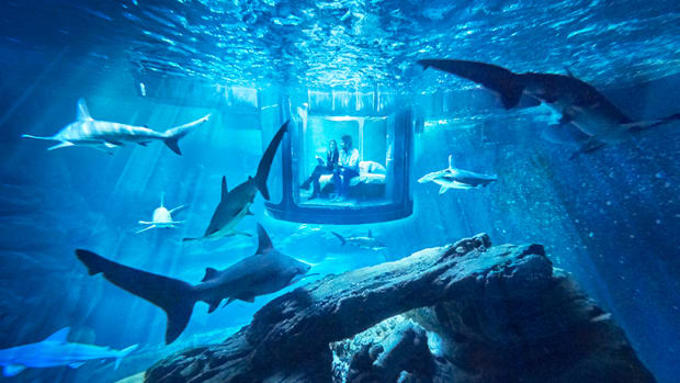 airbnb-ubi-bene-paris-aquarium-shark-suite-designboom-01.jpg