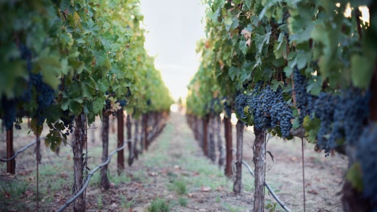 The Gentlemen's Guide to Napa Valley