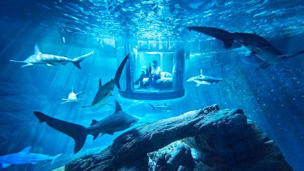 airbnb-ubi-bene-paris-aquarium-shark-suite-designboom-01.jpg