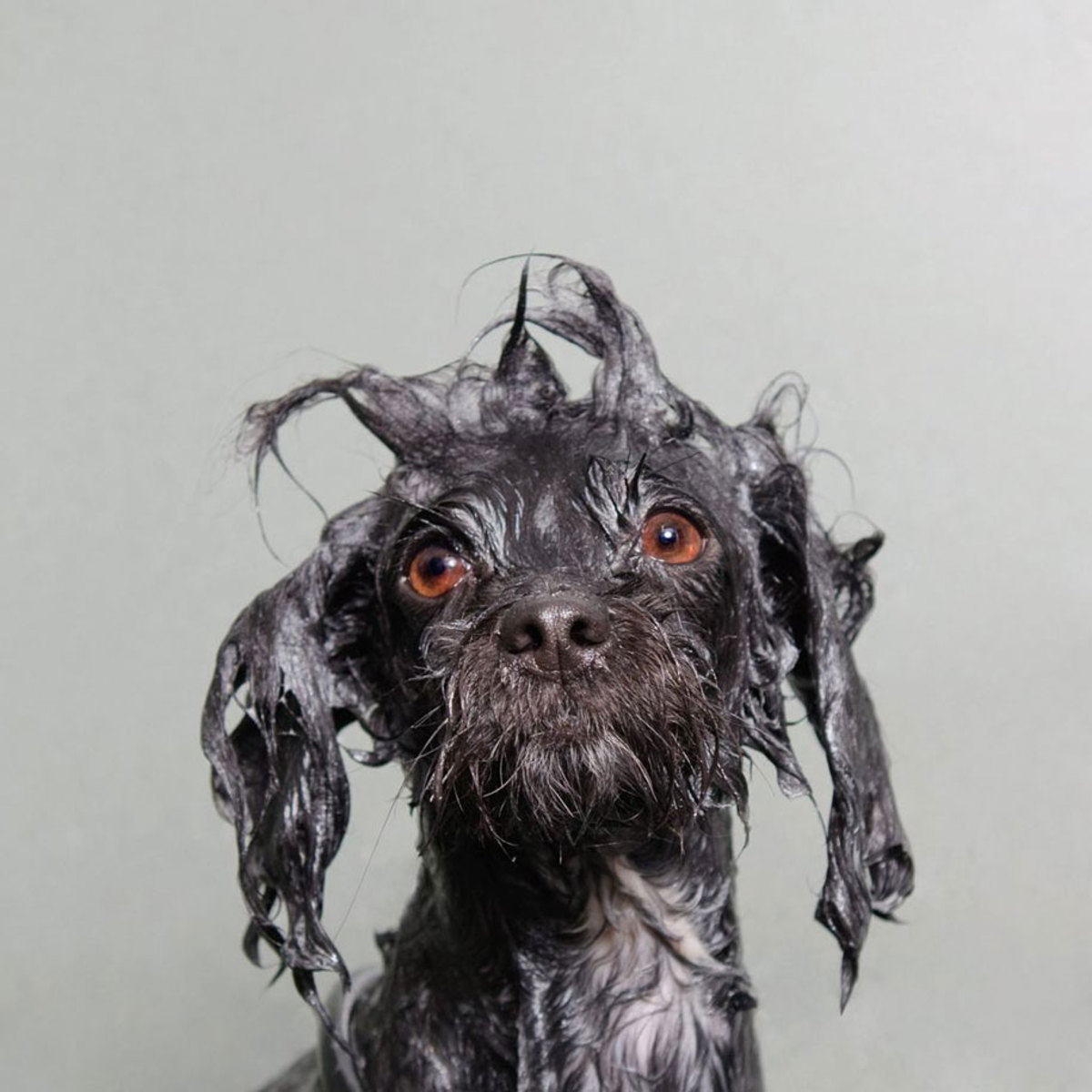 wet-dogs-striking-paws-2