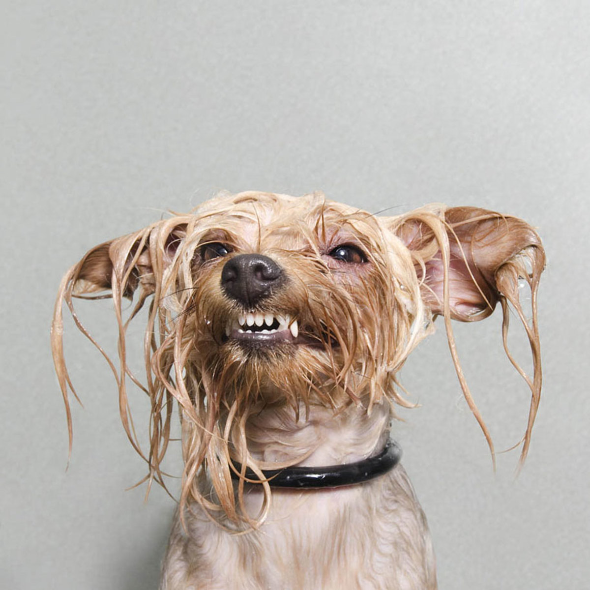 wet-dogs-striking-paws-7