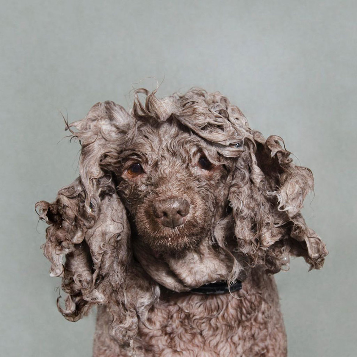wet-dogs-striking-paws-12
