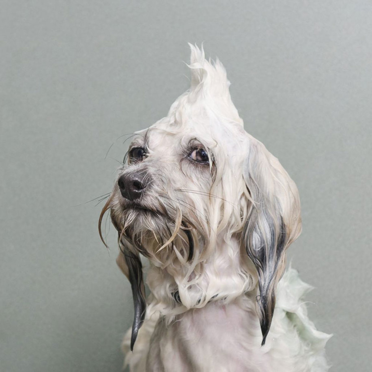 wet-dogs-striking-paws-8