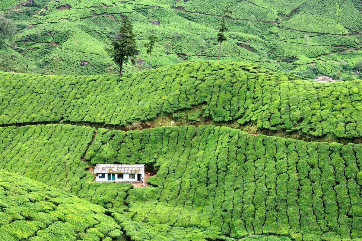 House in tea plantation, Munnar